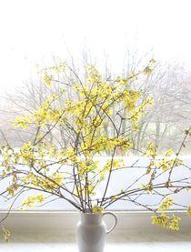 Forsythien-Zweige von Marion Akkoyun