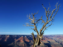 Grand Canyon mit Baumgerippe by buellom