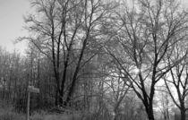 Schneelandschaft von Ralph Bridges
