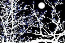 Mondblüten von poseidon66