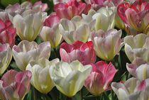 'Tulpen' von Elke Balzen
