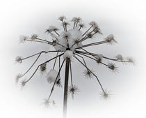 'Eisblüte' von Elke Balzen
