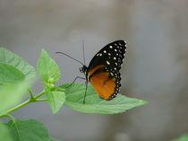 Schmetterling im schönsten Kleid von malitia