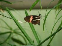 Schmetterlingstanz 2 von malitia