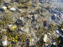 Ufer von malitia