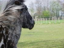 Träumendes Pony von malitia