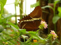 Schmetterling auf einem Blatt by malitia
