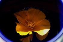 Flower in the Water von objectart