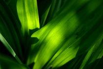 Green von objectart