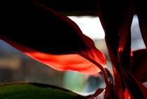 Red in the Light von objectart