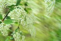 Blüten in Aktion von sehorgan