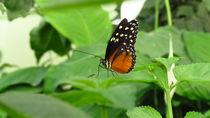 Schmetterling by Matthias Winkelmann