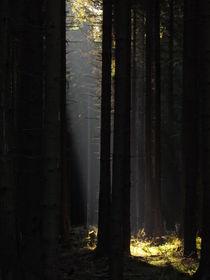 Sonnenstrahl von Matthias Winkelmann