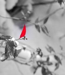 Winterdetail by Katharina Weigl