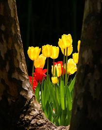 'Tulpenlichtung' von Frank Rebl