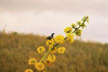 Blume mit Vogel von pimlico