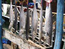 Fischfang von pimlico