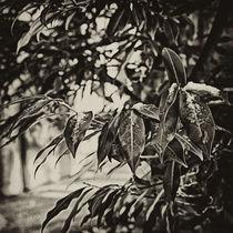 Herbst von bildkuss
