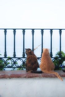 Lovecats by miekephotographie