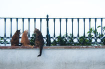Talking Cats by miekephotographie