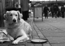 Was gibt es zu essen?- Straßenhund von miekephotographie