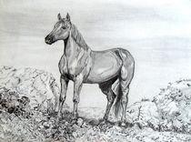 Pferd in Geröllwüste von malatelierstuke
