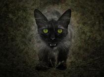 Katze auf der Pirsch von pahit