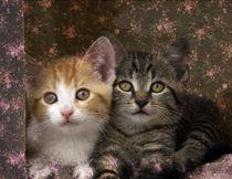 Zwei Kätzchen by pahit