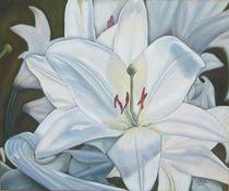 Weiße Lilie von pjb-art