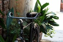 Fahrrad von Boris Manns