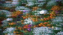 Frühlingsblumen von Armin Schumm