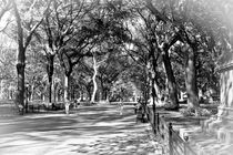 Central Park Stroll B&W by Ian C Whitworth
