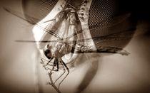 Insektenwelt by Uwe Biere