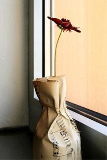 Sehnsucht einer Schokoladenblume von blickpunkte