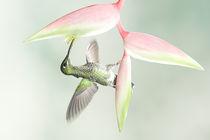Gbasco-artflakes-hummingbird-24