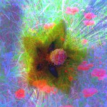 Blütenzauber von Peter Norden