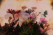 Schattenblumen von pahit