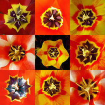 Tulpenkaleidoskop by pahit