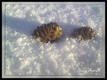 Snowy Acorns