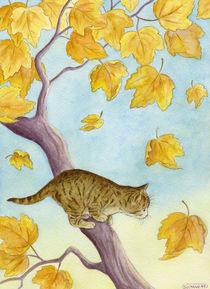 Lttle cat by Soltane Hocine