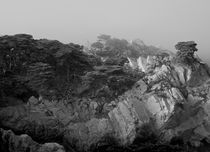 Point-lobos007-copy-version-2