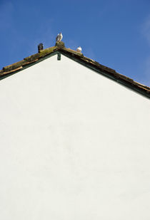 Pigeons on roof, Tiradentes, Province of Minas Gerais, Brazil by Gustavo Xavier
