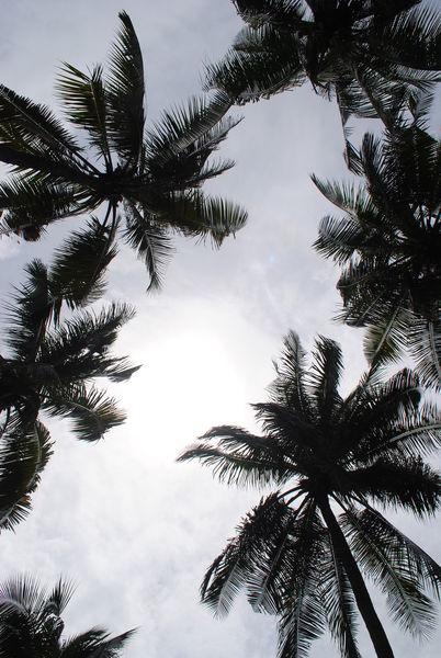 Coconut-trees-bangkok-by-ynr9290