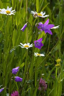 Wiesenblumen von stelda