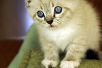 cat by Heli-Maarja Varvas