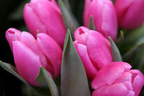 Pink Tulips von Sónia Lamêra