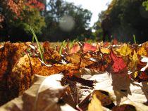 fall theme by Ksenia Shatunova