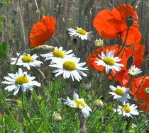 Sommerblumen von Stefan Grajek
