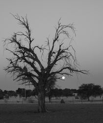 dry tree by james smit