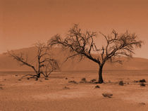 sossusvlei by james smit